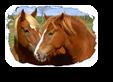 Vign_chevaux2